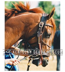 2003 Funny Cide Head Shot Photo,#129-822-17A